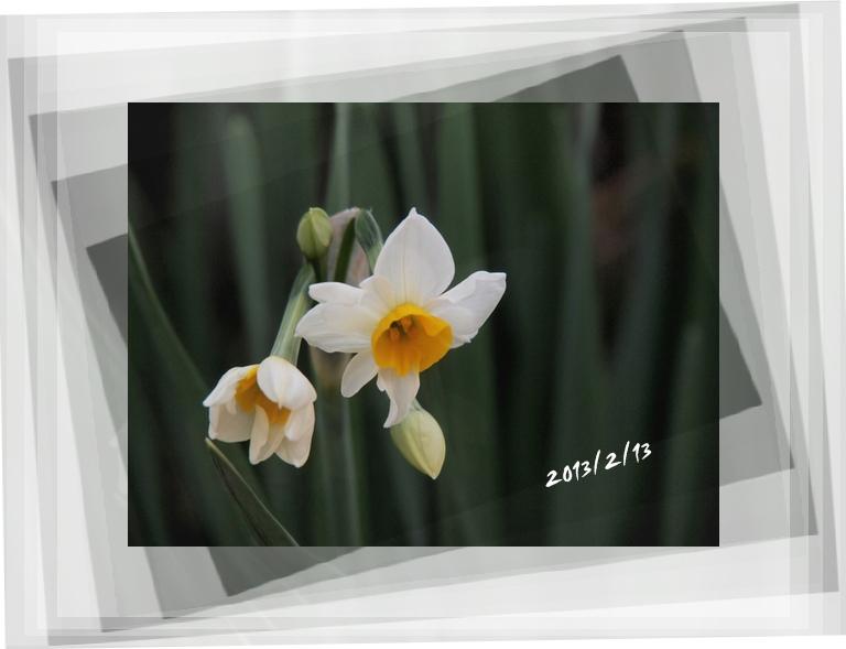 スイセン記念日_c0026824_17184211.jpg
