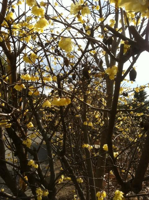 春の息吹_e0184224_11101539.jpg