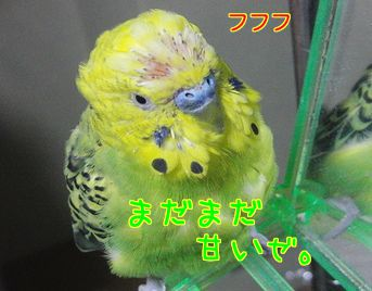 f0196665_13144174.jpg