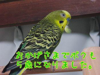 f0196665_13272694.jpg