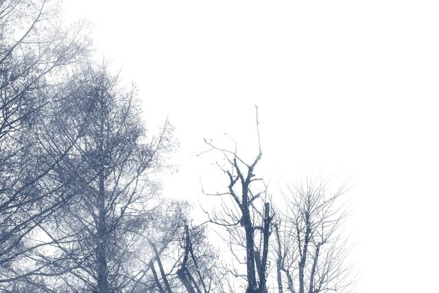 冬の写真、幻想的(かな?)_a0158797_0104749.jpg