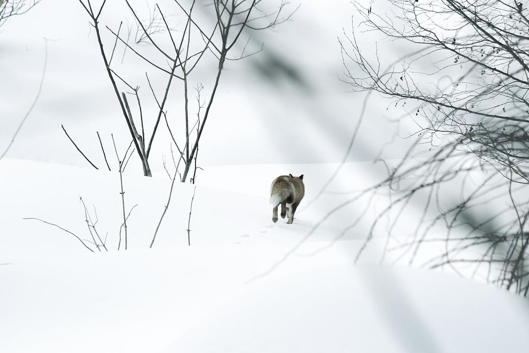 冬の写真、幻想的(かな?)_a0158797_0192855.jpg