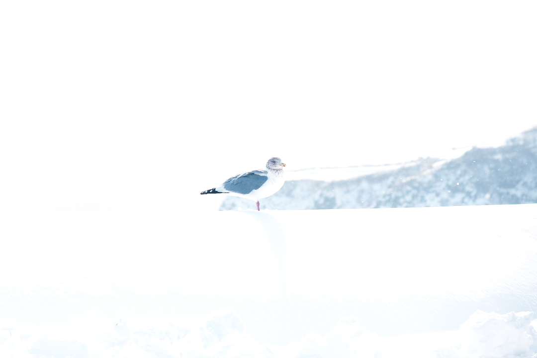 冬の写真、幻想的(かな?)_a0158797_08295.jpg