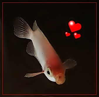 バレンタインデー in 新江ノ島水族館 2013 PART2_b0145398_2341088.jpg