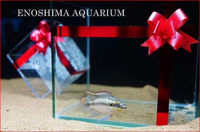 バレンタインデー in 新江ノ島水族館 2013 PART2_b0145398_2375488.jpg