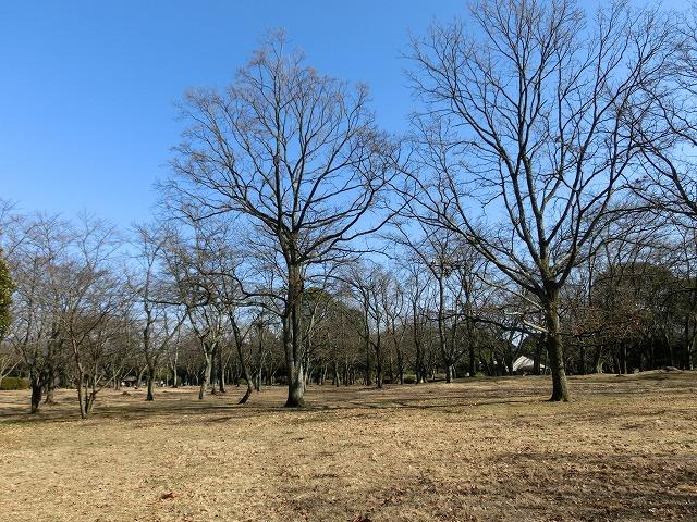 祝日の広見公園と、初めて訪れた「稲垣邸」_f0141310_7153753.jpg