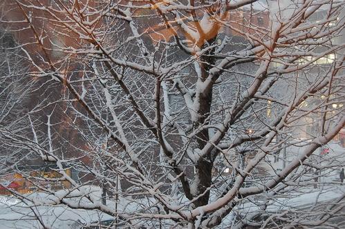 牡丹雪が舞い降りた一日でした。_a0112812_2258371.jpg