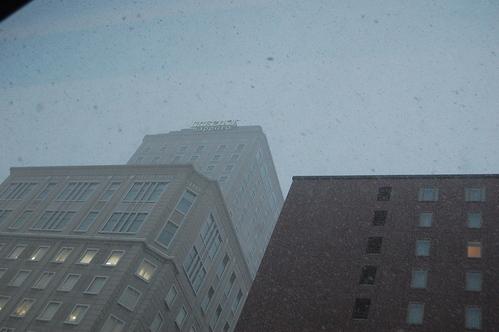 牡丹雪が舞い降りた一日でした。_a0112812_236422.jpg