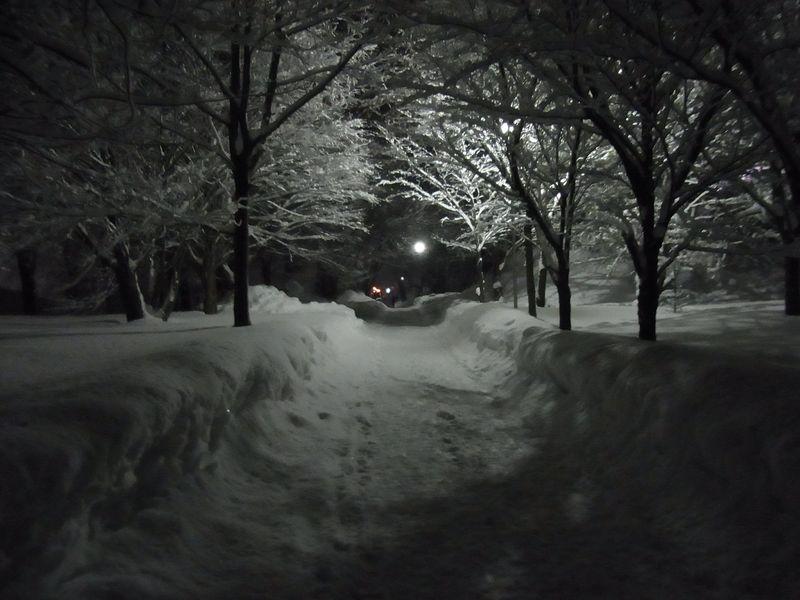 午後の大雪_c0025115_22193962.jpg