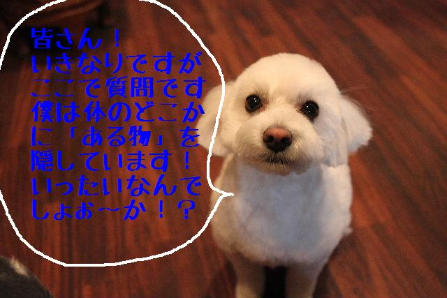 b0130018_1849713.jpg