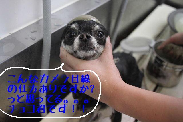 b0130018_18515383.jpg