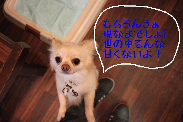 b0130018_18541470.jpg