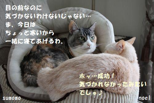 f0063729_16101450.jpg