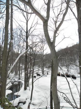 雪遊び大好き!龍泉洞黒豚_b0206037_18564891.jpg
