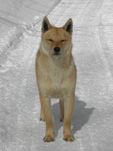 雪遊び大好き!龍泉洞黒豚_b0206037_19242346.jpg