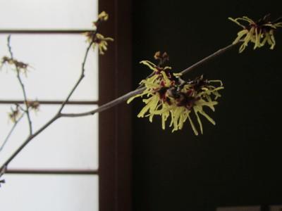花を摘む_a0255443_21573143.jpg
