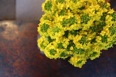 花だより_a0279848_224176.jpg
