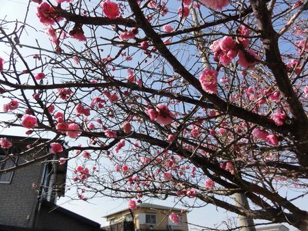 春の息吹き…あちこちに_c0108460_16125735.jpg