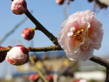 春の息吹き…あちこちに_c0108460_1616334.jpg