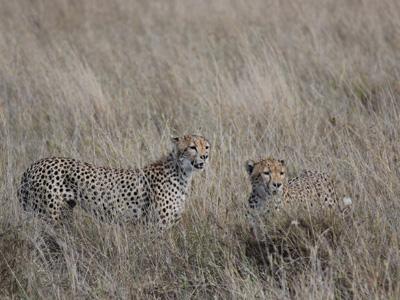 今年一押し!南アフリカ サーディンランツアー!   South Africa_e0184067_1962123.jpg