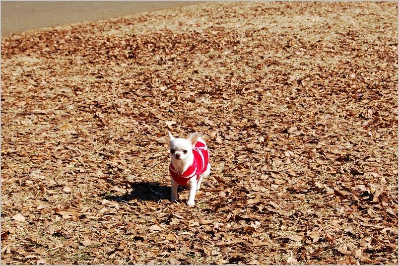 2月10日お散歩会 写真たっぷりアップっぷ_a0155999_23224915.jpg