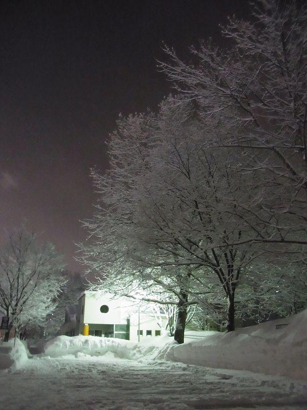 午後の大雪2_c0025115_19303596.jpg