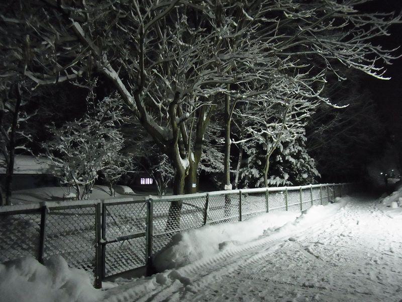 午後の大雪2_c0025115_1930509.jpg