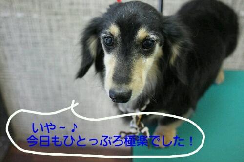 b0130018_20135177.jpg