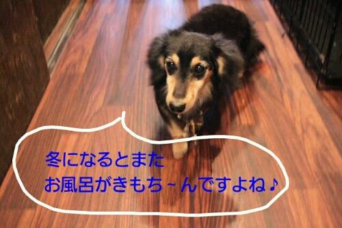 b0130018_2015624.jpg