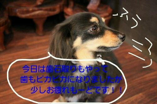 b0130018_2028262.jpg