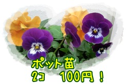 b0153121_13594224.jpg