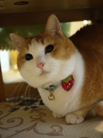 猫のお友だち ふくちゃん編。_a0143140_015796.jpg
