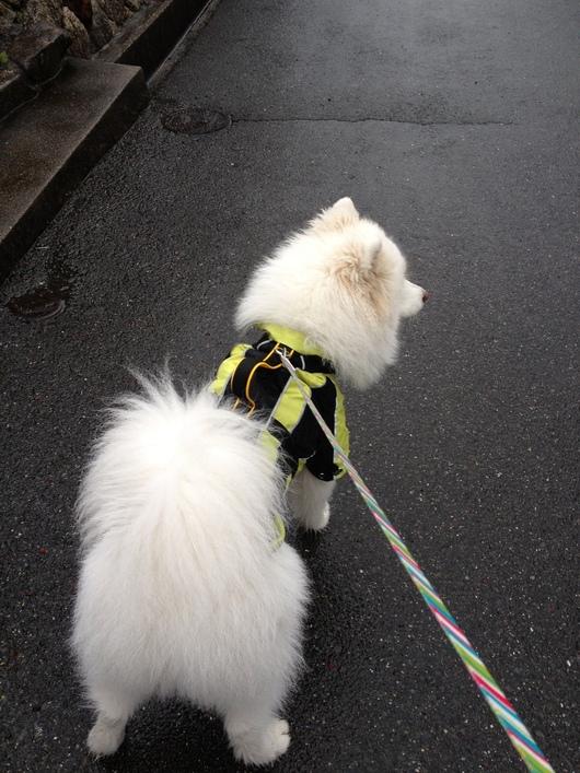 雨中散歩の後はまったり_f0128542_10351534.jpg