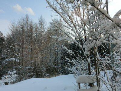 またまた雪です!_f0019247_16375550.jpg