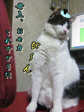 b0151748_1130528.jpg