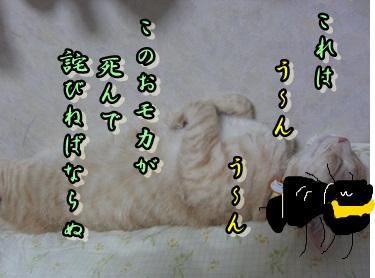 b0151748_11395698.jpg
