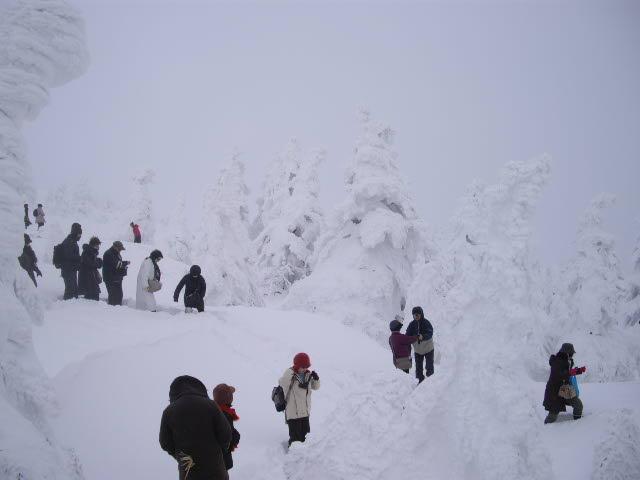 一転、極限の雪の風景_d0116059_2295850.jpg