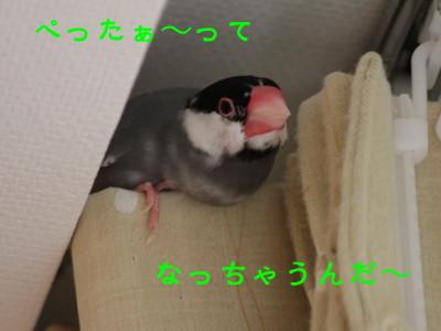 b0158061_22402677.jpg