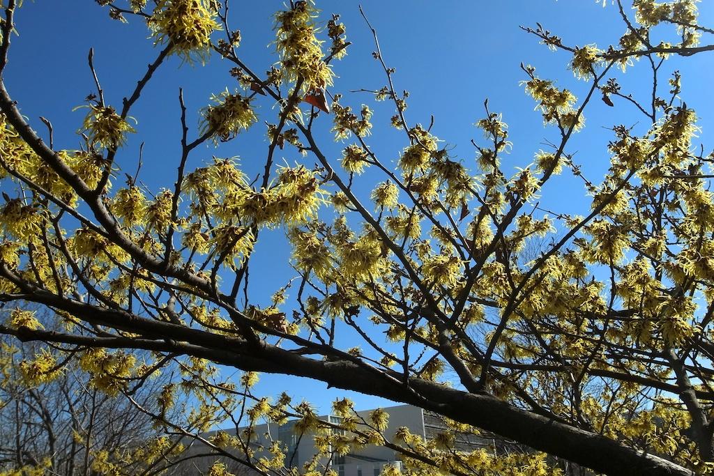 春はもうすぐ・・・_c0248464_16144379.jpg