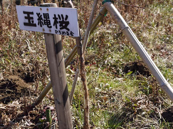 3年連続野口初太郎頌徳碑建立地の河津桜に肥料:2・11 _c0014967_12535412.jpg