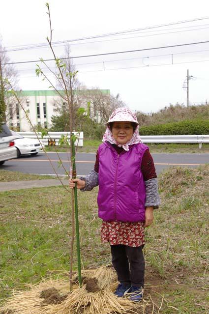 3年連続野口初太郎頌徳碑建立地の河津桜に肥料:2・11 _c0014967_12581631.jpg
