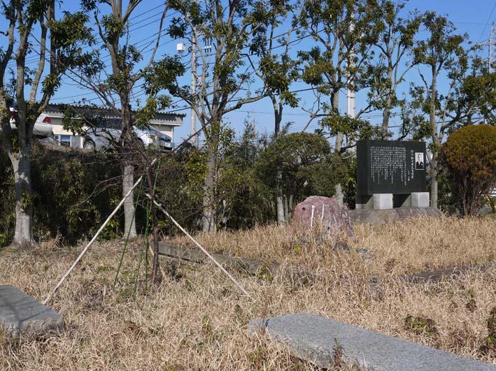 3年連続野口初太郎頌徳碑建立地の河津桜に肥料:2・11 _c0014967_1343097.jpg