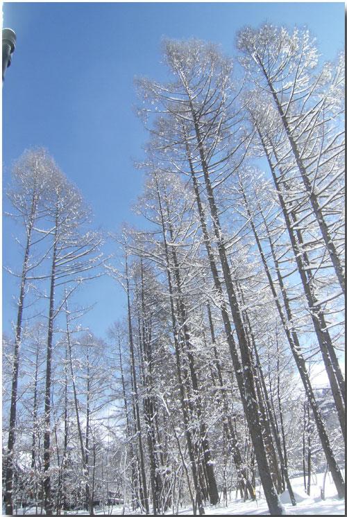 粉雪がスイーツに見える? モフモフに囲まれたシャレーグリンデル_d0109415_1151867.jpg