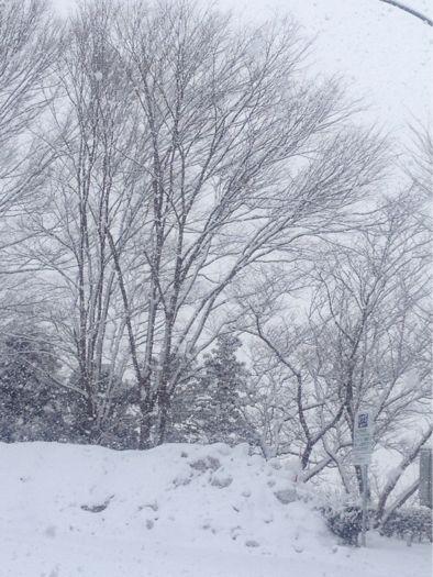 雪_b0099226_84979.jpg