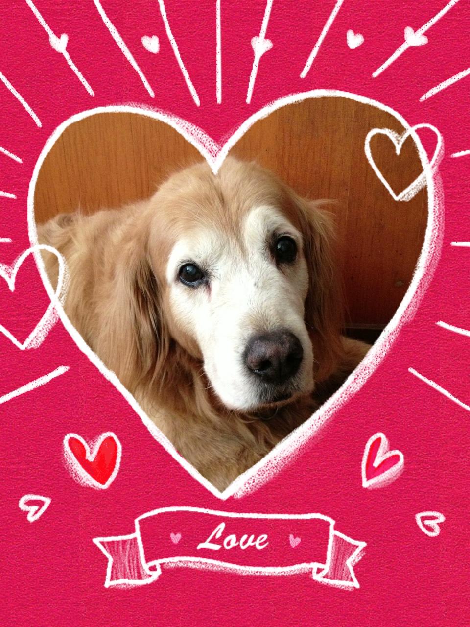 ST ヴァレンタイン DAY  DOG編_d0161933_11501871.jpg