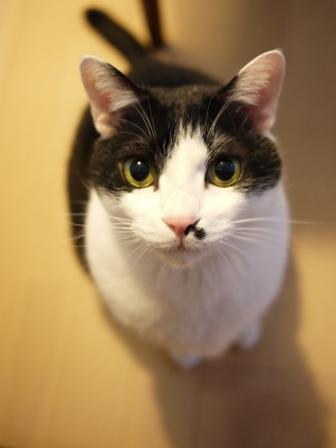 猫のお友だち 正宗くん編。_a0143140_23584975.jpg