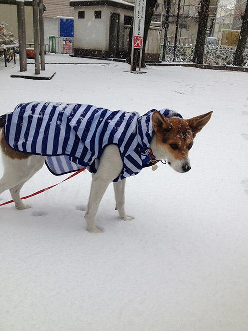 お外が寒い_b0156872_223935100.jpg