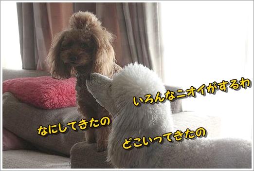 b0111376_12505688.jpg