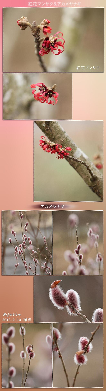 f0164592_21264210.jpg