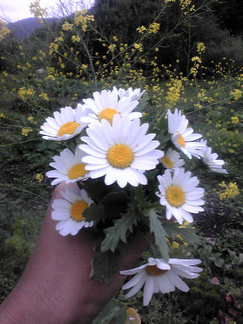 春便り_e0220493_635497.jpg